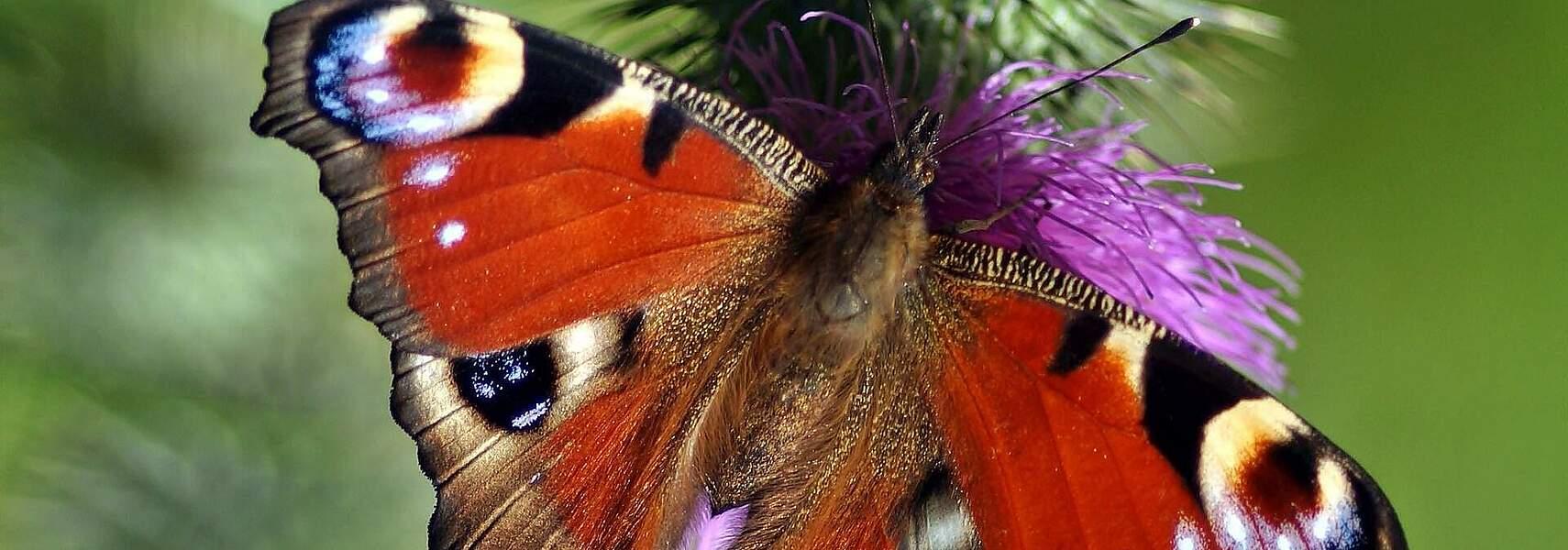 Bundesrat hat Chance beim Insektenschutzpaket vertan