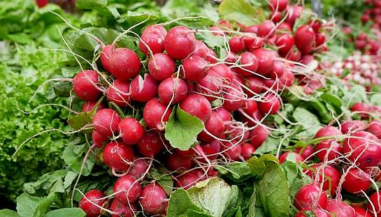 A4_radishes-2331135_c_JuSa2000